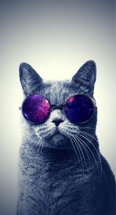 9f4fec819a Gato/Cat con anteojos/gafas galaxia ♡♥   Galaxia   mati   Fondos ...