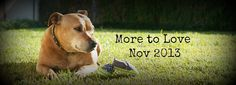 Pregnancy announcement with dog. Pregnancy Announcement Photos, Pregnancy Photos, Expecting Baby Photos, Little Babies, Fur Babies, Ems, Baby Mine, Tan Guys, Baby Planning