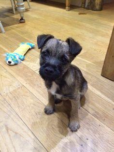 Bert aged 11 weeks