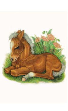 Robin James.net EStore Horse Drawings, Animal Drawings, Art Drawings, Robin, Cute Animal Illustration, Illustration Art, Animal Illustrations, Pretty Horses, Beautiful Horses