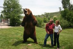Bart the grizzly bear with his trainer Doug Seus and a slightly pensive Allison Langdon. When male grizzlies stand up they can reach close to three metres in height.