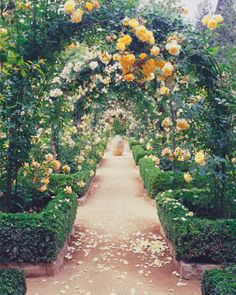 Boxwood Hedges and Climbing roses. Love this!!