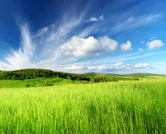 The Truth About Land Investing: 15 Warning Signs To Look For When Buying Vacant Land Investing In Land, Vacant Land, Commercial Real Estate, Warning Signs, Investors, Hobbit, Business Tips, Landing, The Good Place