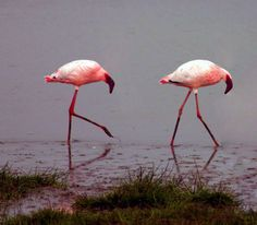 Flamingos would go hungry. :( | 28 Animals That Look Way Better With No Necks