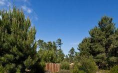 Topiaris | Garden in Comporta