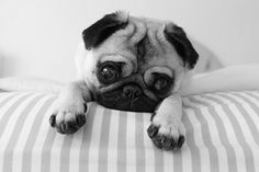 23 Awesome black and white animal photography dog images