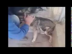 The Healing Power of Love. . Emotional - Abused Dog Is Shown Affection For The First Time!
