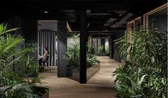Inside the new office of #slack in Melbourne. It's like a jungle!