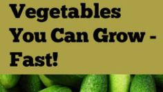 8 Organic Vegetables You Can Grow - Fast!