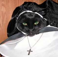 This cat is one Sister Act at the convant.