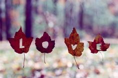 Do you remember frolicking through the autumn leaves? I think it was love...