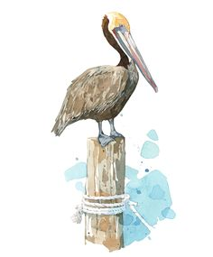 Pelican watercolor art print - By David Scheirer - Prints and cards available in my shop.