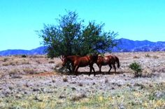 ranches and horses