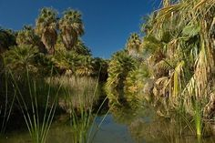 Book your tickets online for Coachella Valley Preserve, Palm Springs: See 283 reviews, articles, and 178 photos of Coachella Valley Preserve, ranked No.7 on TripAdvisor among 100 attractions in Palm Springs.