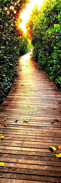 TOP 11 Most Beautiful Paths On The Planet   - YouMustBeHere.com