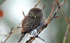 Bird resting by Scott Brushchenko