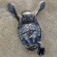 Save Green Sea Turtles - FB