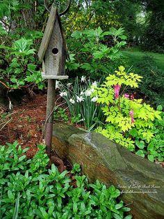 Flower bed with evening primrose, bleeding heart and narcissus (Garden of Len & Barb Rosen)