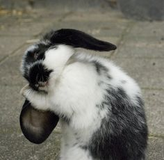 Gotta keep those adorable floppy ears looking fabulous!