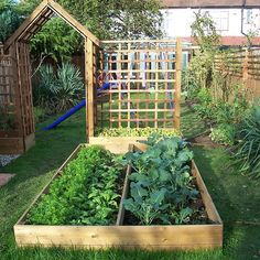 Raised vegetable garden... One of our own