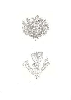 Coral. | Ryn Frank Doodle Tattoo, Tattoo Drawings, Doodle Designs, Tattoo Designs, Botanical Illustration, Illustration Art, Coral Pattern, Flower Images, Art Sketchbook