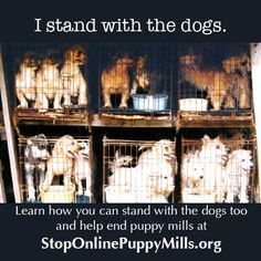 """Share with your dog loving friends... and ask them to never buy a puppy from a """"click and ship"""" puppy seller online or in a pet store."""