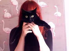 redhead kitty cat in front of pink flamingo wallpaper