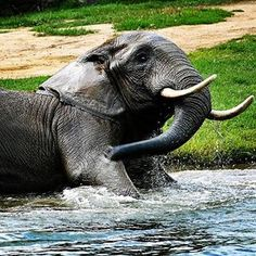 Zoo de Granby Elephant, Animals, Gifts, Animales, Animaux, Elephants, Animal, Animais
