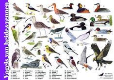 per 5 Animals Of The World, Animals For Kids, Science For Kids, Science Nature, Aquatic Birds, Different Birds, Garden Animals, Bird Illustration, Fauna