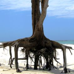 Show me your Legs! - Diani, Coast -. Kenya