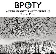 This year's Runner-up in the BPOTY creative Imagery category is this imaginative take on a Starling murmuration by Rachel Piper.