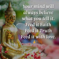 feed it ❤️