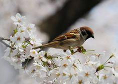 [Movie] Breathtaking Blossoms at Chidorigafuchi – Tokyo's Favorite Sakura Spot Cherry Blossom Season, Japan Travel Guide, Tiny Flowers, Tokyo, Animals, Animales, Tokyo Japan, Animaux, Small Flowers