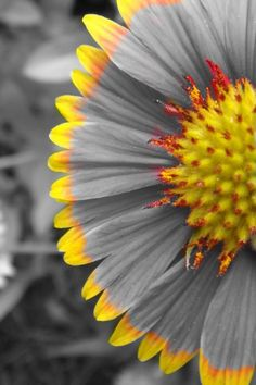 Yellow colour splash