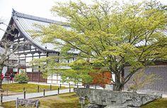 Travel Diary: Kinkakuji and Maruyama-Koen Park Japan Travel, Kyoto, Cabin, Park, House Styles, Outdoor Decor, Cabins, Parks, Cottage