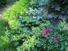 combination of yellows (lady's mantle, hakonechloa grass), blues (Colorado blue spruce), and bright pinks and whites (astilbe)... too bad this won't work in FULL Colorado sun.