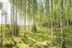 Kesä.. ahhhhh!! Ei sitä turhaan taas odotettu kymmentä kuukautta.  #summer #visitfinland #suomi #landscapelovers #summertime #naturelovers #sunshine Tämä kuva löytyy Shutterstockista: http://ift.tt/2t20Rmy