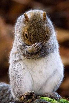 now if only I could remember where I stored those nuts!!!