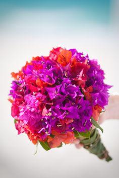 Image detail for - Bougainvillea bouquet, orange and purple