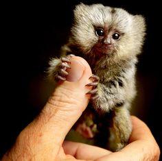 tiny little guy