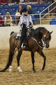 Egyptian Arabian horse