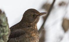 Black bird portrait