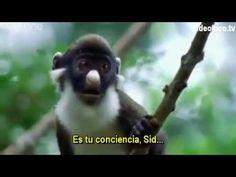 Alan!  Alan!  Alan!  Best Animal Voiceover Video EVER - with Spanish Subtitles