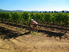 Ride and sample your way through #Tuscany on VBT's Tuscany biking vacations. #Wine #Italy