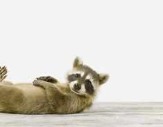 Cutest Baby Animals (15 photos). Photography by Sharon Montrose.