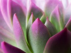 medium-large/exotic--pink-purple-green flower landscape photograph nadja drieling photography artecco-fine art