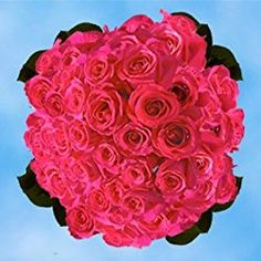150 Fresh Cut Hot Pink Roses for Valentine's Day   Versilia Roses   Fresh Flowers Express Delivery   The Perfect Valentine's Day Gift