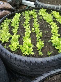 30+ Creative DIY Raised Garden Bed Ideas And Projects --> Used Tired Raised Garden Bed #DIY #garden #raised_bed