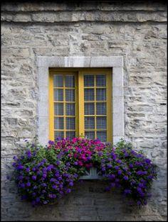 flower box..beautiful