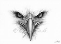 Bildergebnis für Eagle Drawings